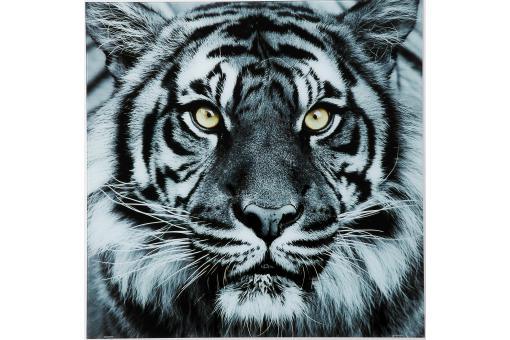 tableau tigre en verre sharon tableau animaux pas cher. Black Bedroom Furniture Sets. Home Design Ideas