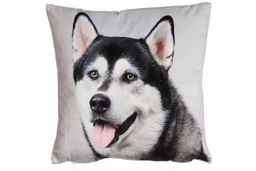 coussin chien husky 34 x 34 cm deco design. Black Bedroom Furniture Sets. Home Design Ideas