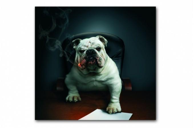 Tableau Animaux Chien Bulldog avec Cigare 60X60 cm Plus d'infos