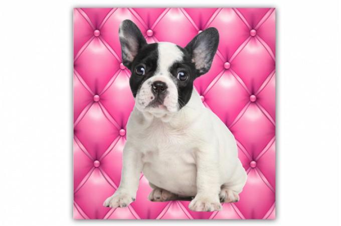 tableau animaux chien bulldog fond rose 50x50 cm tableaux animaux pas cher. Black Bedroom Furniture Sets. Home Design Ideas