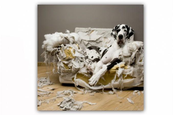 tableau animaux dalmatien sur fauteuil 50x50 cm tableaux animaux pas cher. Black Bedroom Furniture Sets. Home Design Ideas