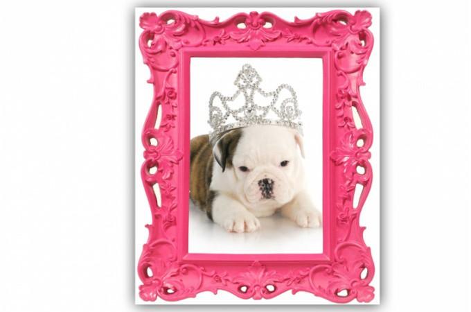 tableaux animaux pas cher tableau chien tendance sur declik deco page 1. Black Bedroom Furniture Sets. Home Design Ideas