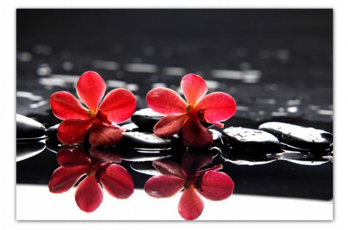 Tableau Floral Fleurs Rouges Sur Fond Noir 80 x 55 cm