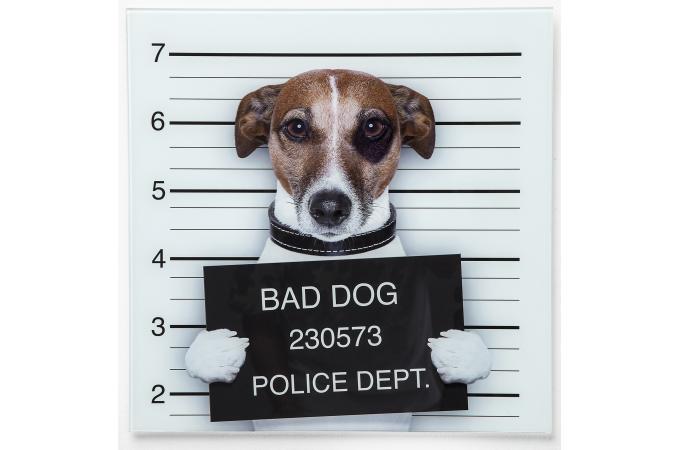 Tableau En Verre Bad Dog 40x40cm Tableau Baroque Pas Cher