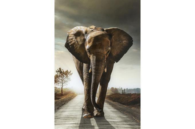 Tableau en verre walking elefant 80x120cm tableau for Tableau tete d elephant