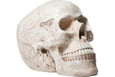 Tirelire Skull Blanc Antique - Tirelire design