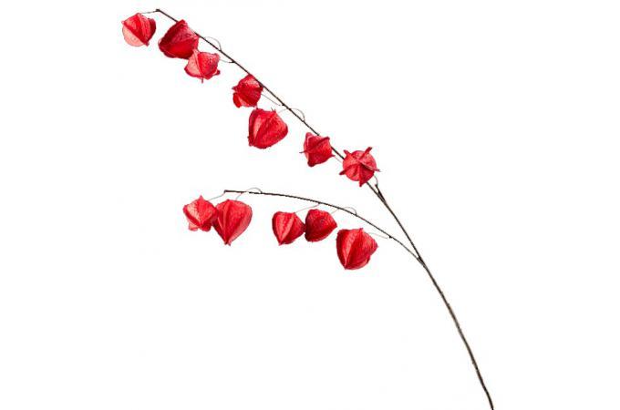 Fleur artificielle physalis rouge h 107 cm plantes for Deco artificielle