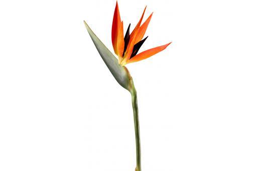 plante artificielle oiseau de paradis rouge h 100 cm plantes artificielles pas cher. Black Bedroom Furniture Sets. Home Design Ideas