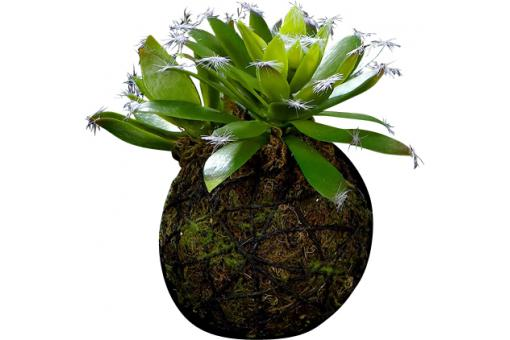 Plante artificielle suspension succulente Longue Feuille